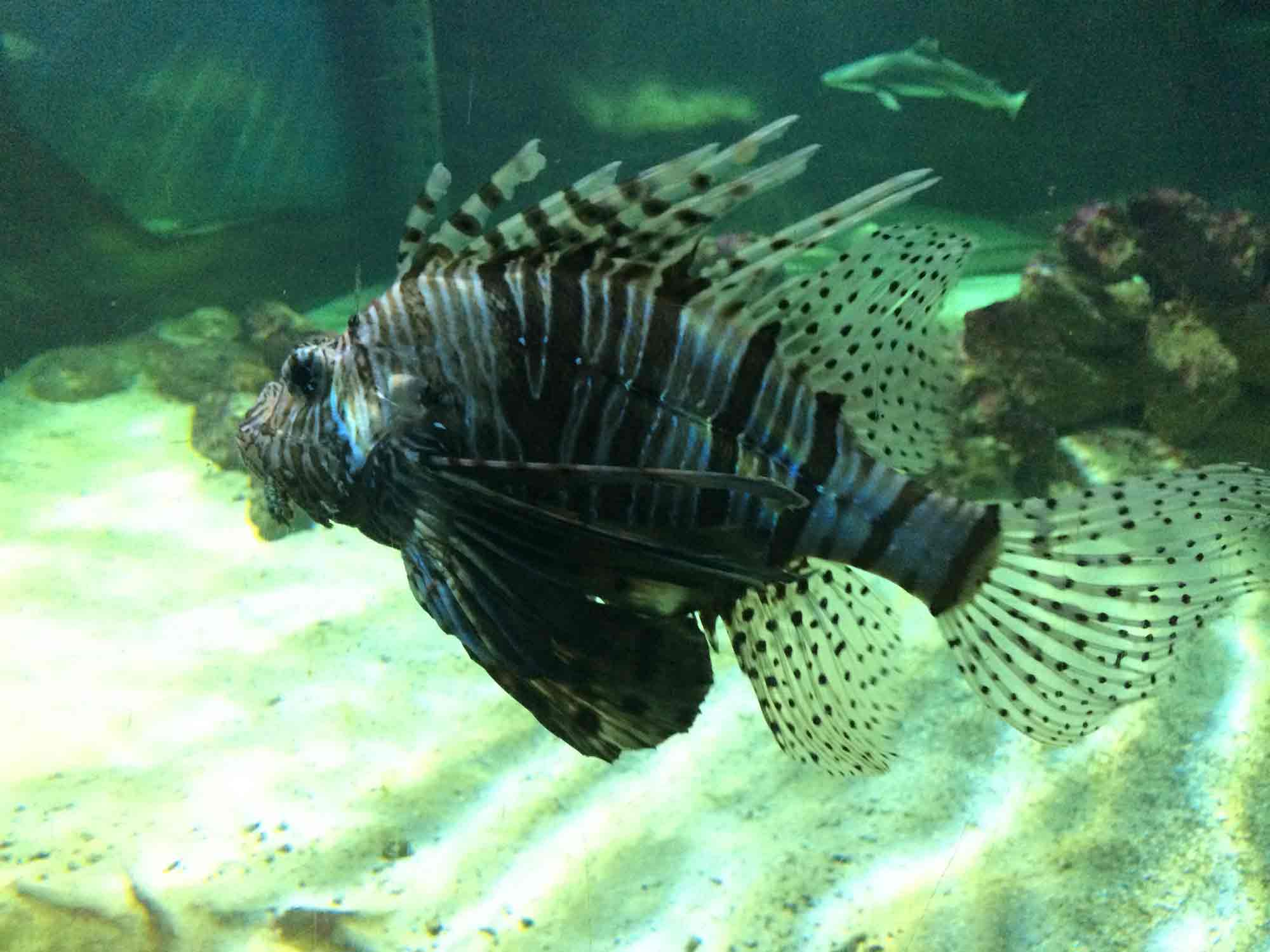 Blue Reef Aquarium Portsmouth – Toddle Doddle